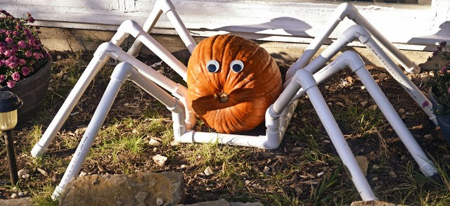 Spook up your front yard this Halloween with a simple to DIY PVC Pumpkin Spider. All you need is a few PVC fittings and a pumpkin of your choosing.