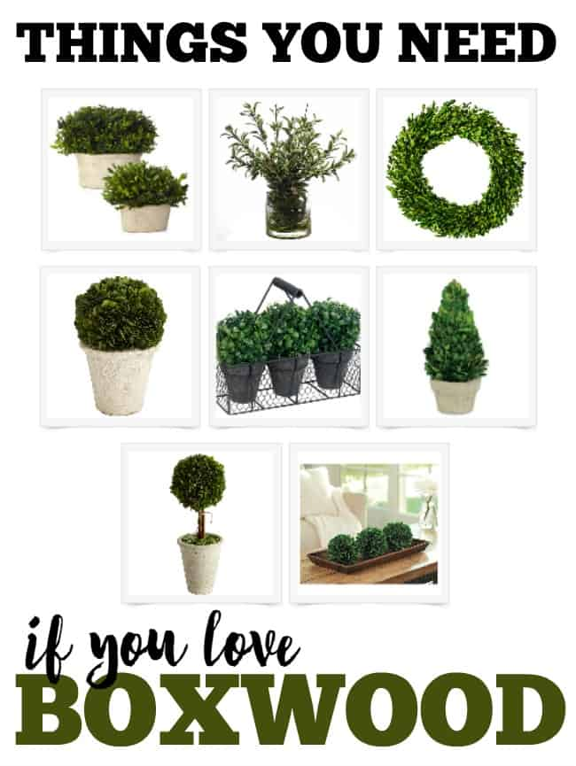 What are the must have things you need if you love boxwood? Check out my favorites list and what I think a boxwood lover needs in their home.